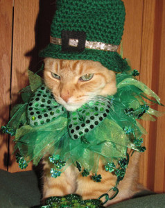 st-patricks-day-angry-cat